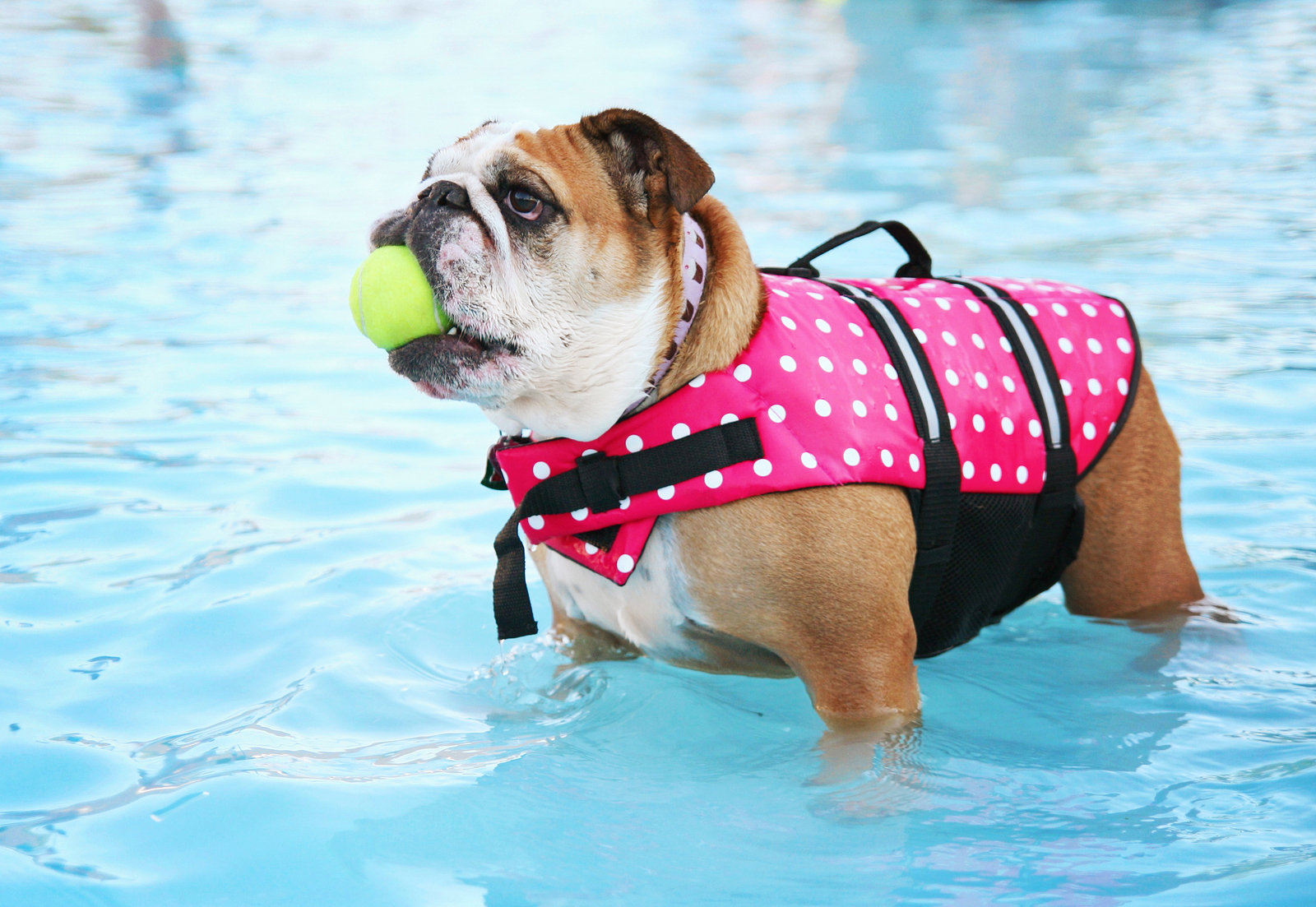 Pros and Cons of Dogs in Your Phoenix Pool